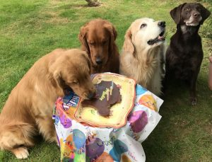 Nutritional Support for Dogs