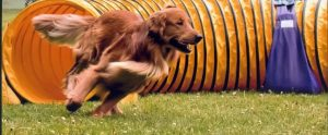 """Thank you so, so much to """"Capital Comets Dog Sports!!"""""""